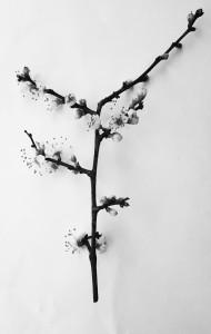 Fotografisches Zitat nach Blossfeldt
