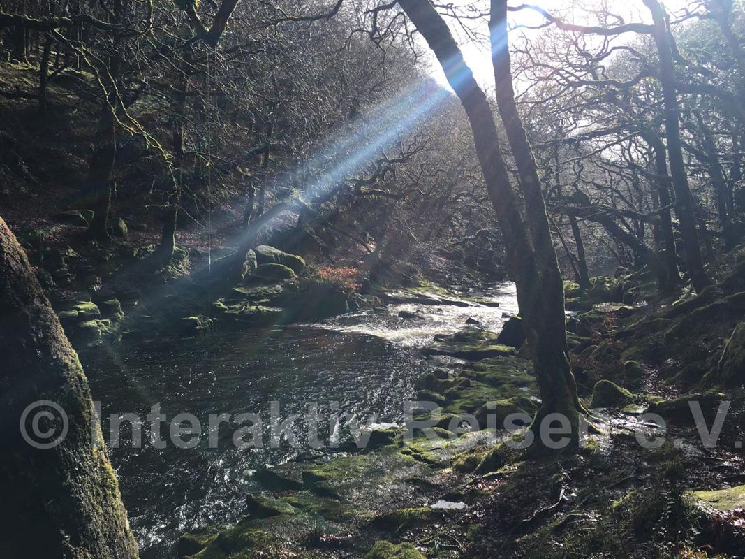 Der river plym im dartmoor